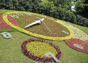 живые часы из цветов