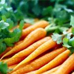 Морковь посевная: Применение и рецепты